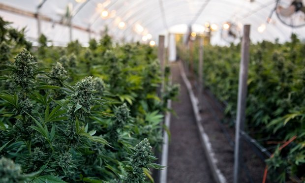 Statewide cannabis sales in Illinois totaled more than $39 million in January.